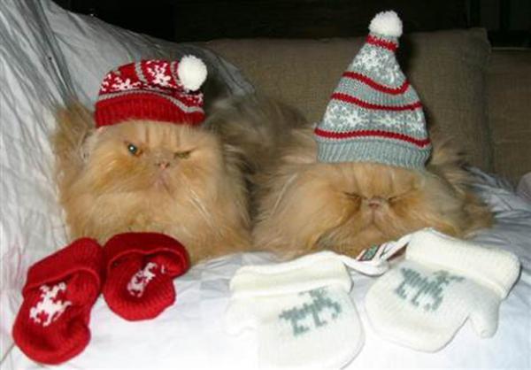 GALERIE – Kočky nenávidí Vánoce