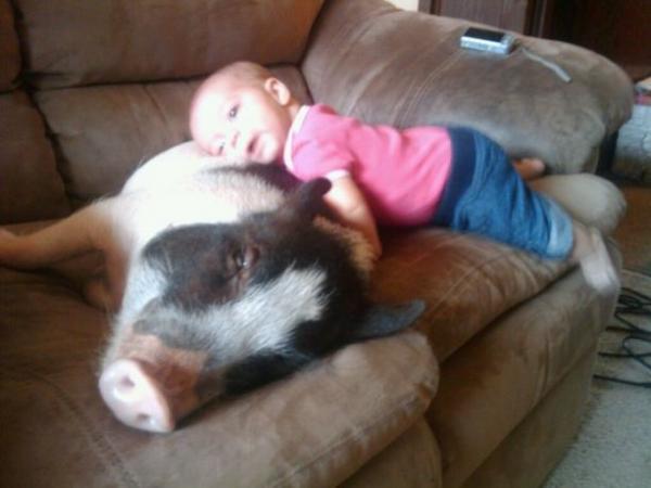 GALERIE – Zvířata a malé děti