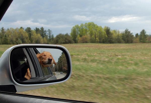 GALERIE – Zvířata a zrcadla