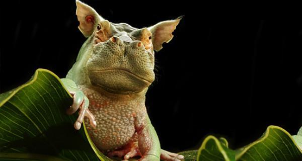 GALERIE – Zvířata a Photoshop