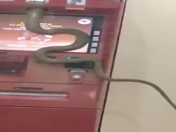Had vlezl do bankomatu