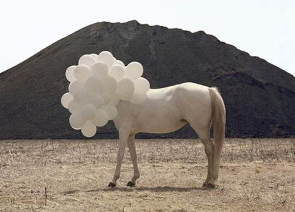 GALERIE - Chudáci koně
