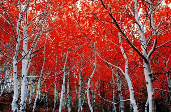 GALERIE – Barevné fotografie přírody