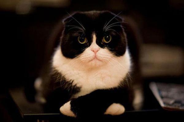 GALERIE – Smutná a nešťastná zvířátka