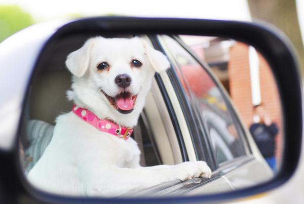 GALERIE – Psi ve zpětném zrcátku