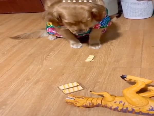 Když pes jí, co nemá