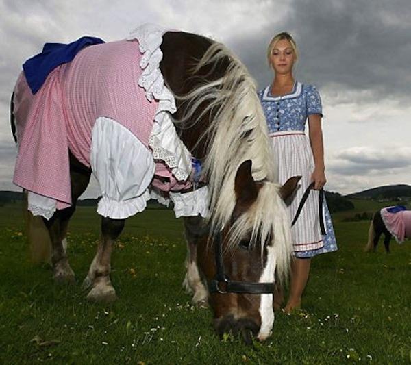 GALERIE – Kůň na všechny možné způsoby