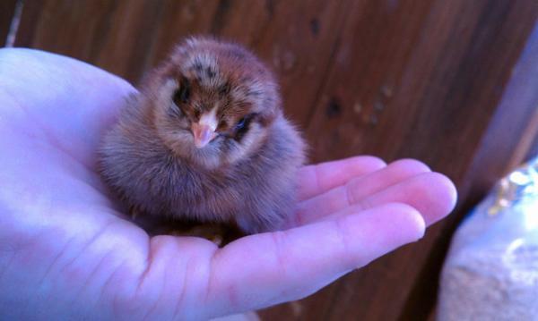 GALERIE – Zvířata přímo do ruky