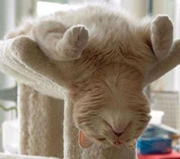 GALERIE – Kočky spící v originální poloze