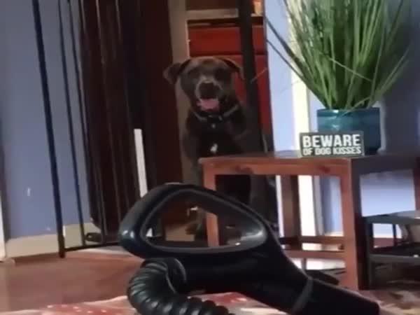 Pes zvládne skoro všechno