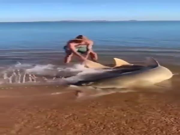Zachránili ohroženého žraloka