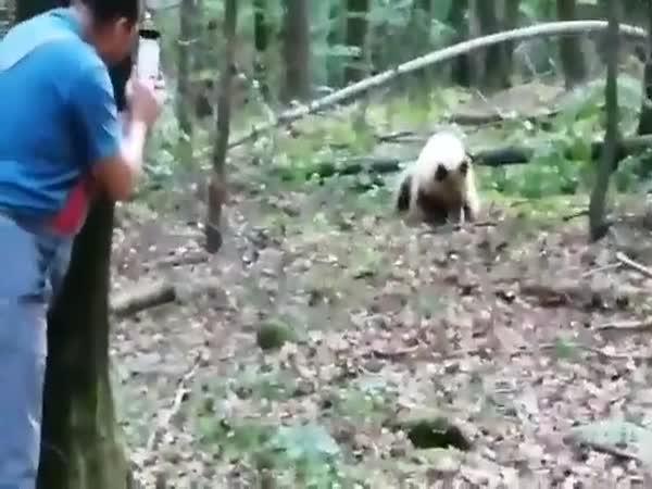 Jak probíhá setkání s medvědem