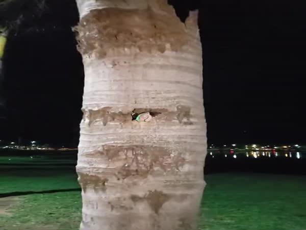 Kmen vyschlé palmy skrýval překvapení