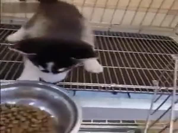 S granulemi snědl téměř i misku
