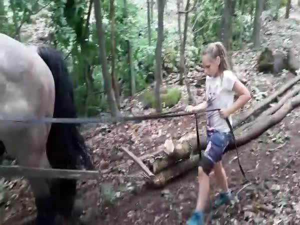 Malá dívka vede obřího koně