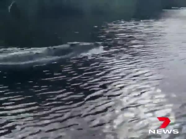 Krokodýl dlouhý 4,5 metru