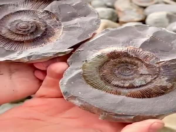Miliony let starý objev
