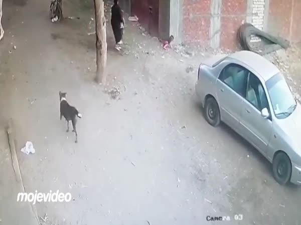 Na dítě zaútočil pes