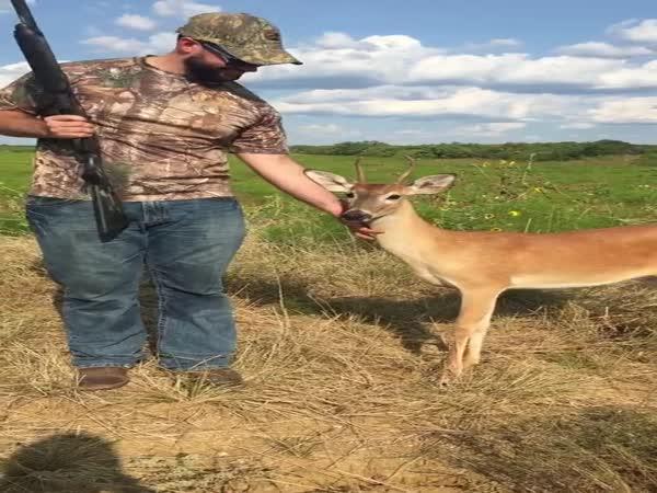 Bambi přišel pozdravit lovce