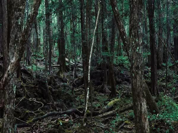 Strašidelné nálezy v lese