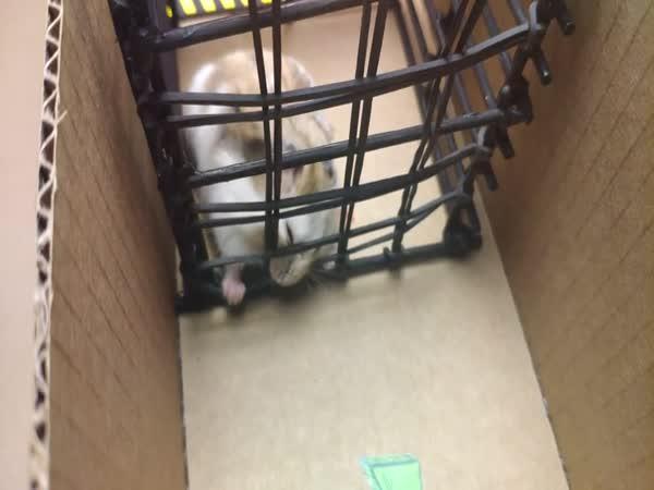 Křeček si zkusil útěk z vězení