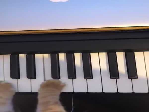 Co dělá kočka, když nejsi doma
