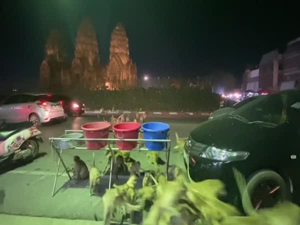 Stovky opic v ulicích Thajska