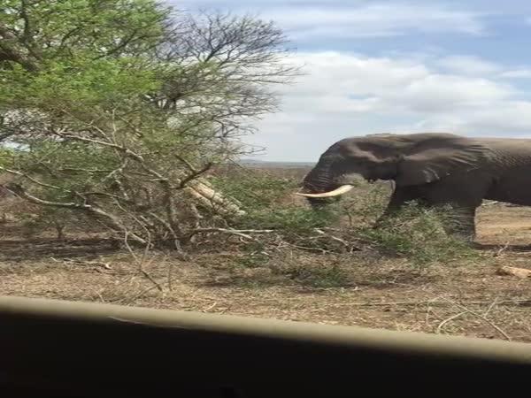 Hrubá síla slona