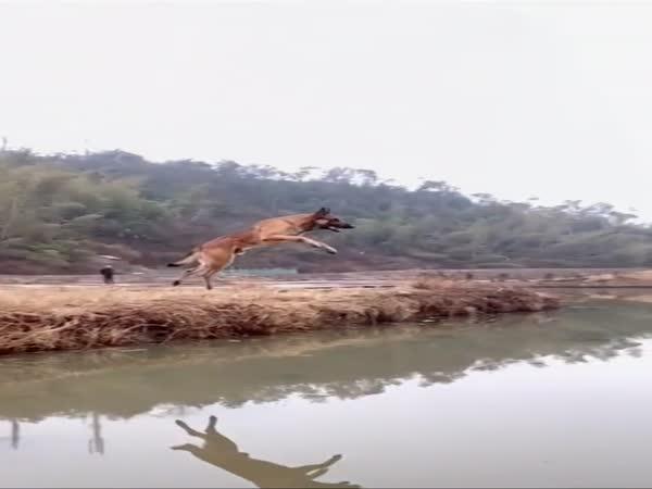 Pes přeskočil 5 metrů širokou řeku