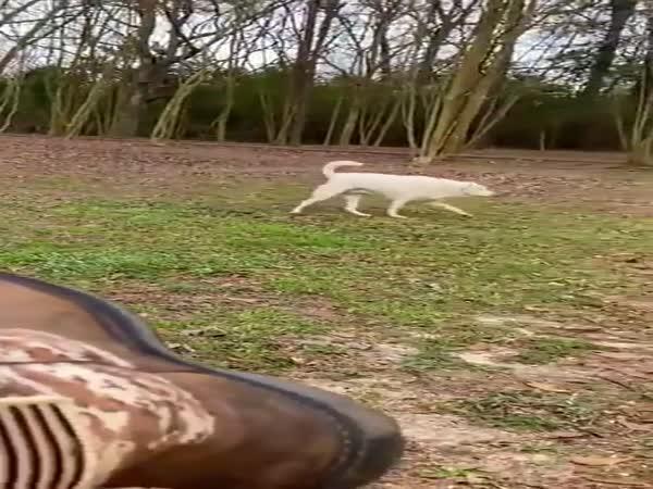 Slepý pejsek našel svého majitele