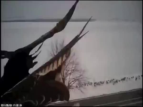 Jak sokol loví