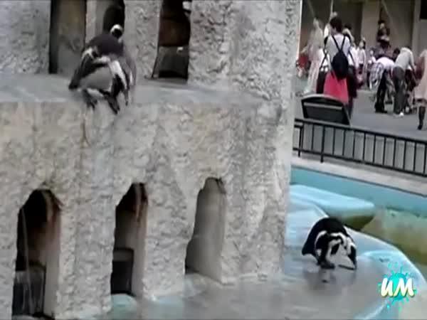 Vtipní tučňáci