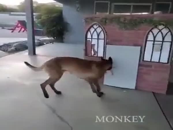 Psí šikulka