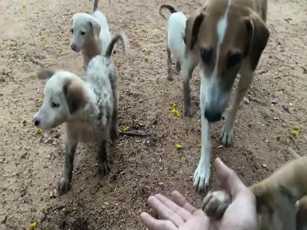 Zachránili štěňata