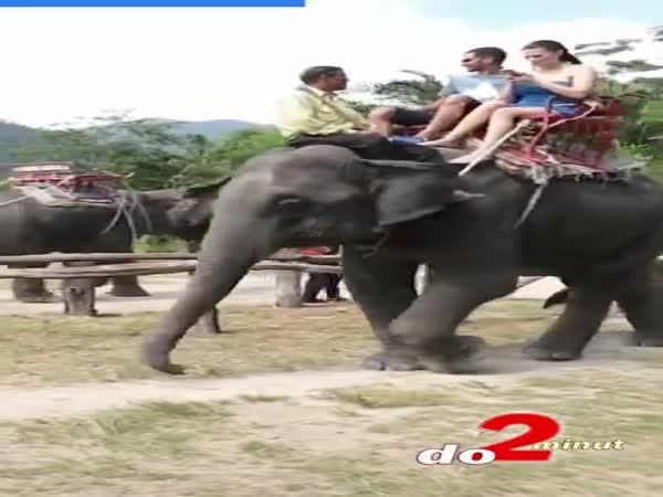 Bude potřeba řidičák na slona