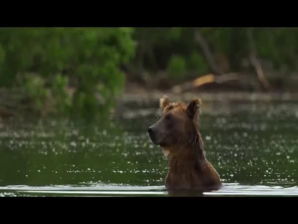 Muž si nevšiml medvíděte
